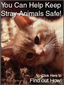 You Can Help Keep Stray Animals Safe!